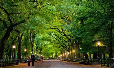 秋意正浓,带你逛逛这些曼哈顿最美的公园!