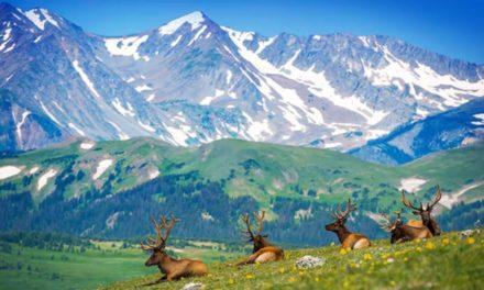 吐血整理 | 行走在自然的奇迹中,美国国家公园Checklist请收好!【上篇】