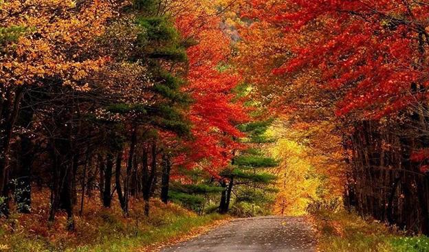 金秋十月赏枫指南丨秋天就是要看红叶的季节啊