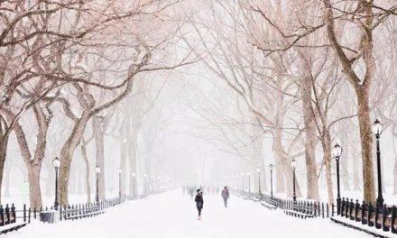 《纽约人冬季行为实录》